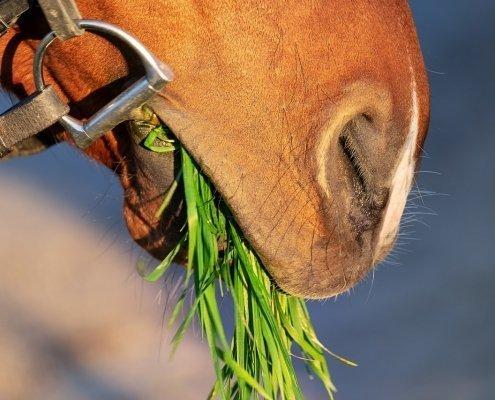 integratori per cavalli apparato digerente
