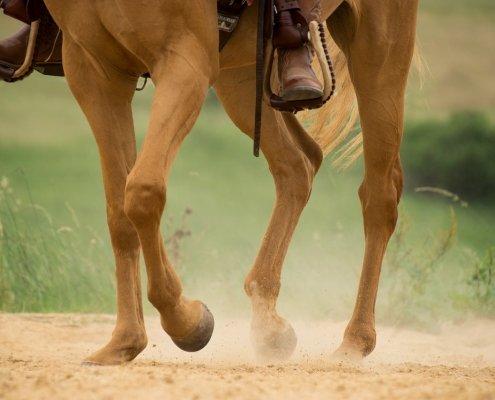 integratori per cavalli articolazioni