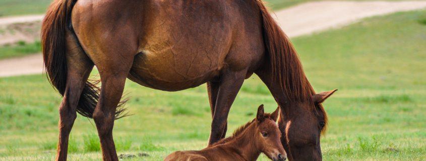 grooming del cavallo