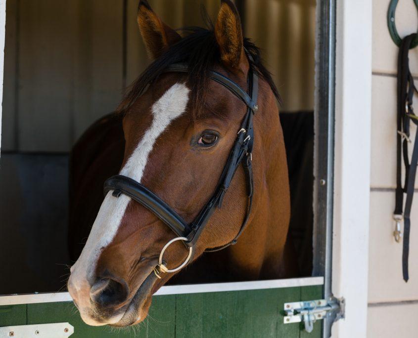 cavalli corretta integrazione