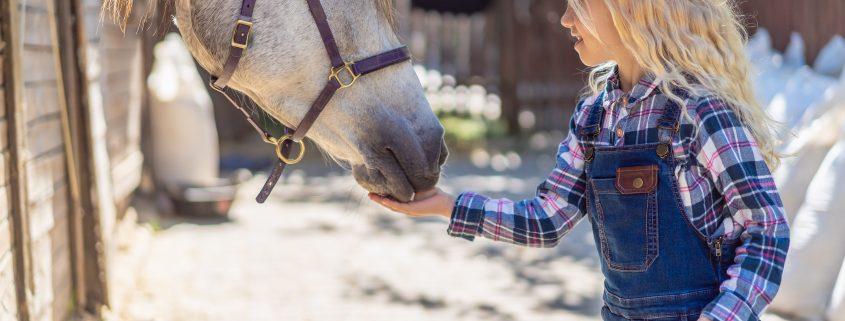 integratore articolazioni cavallo