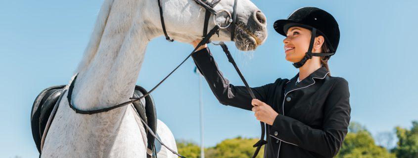 osteoartrite nel cavallo