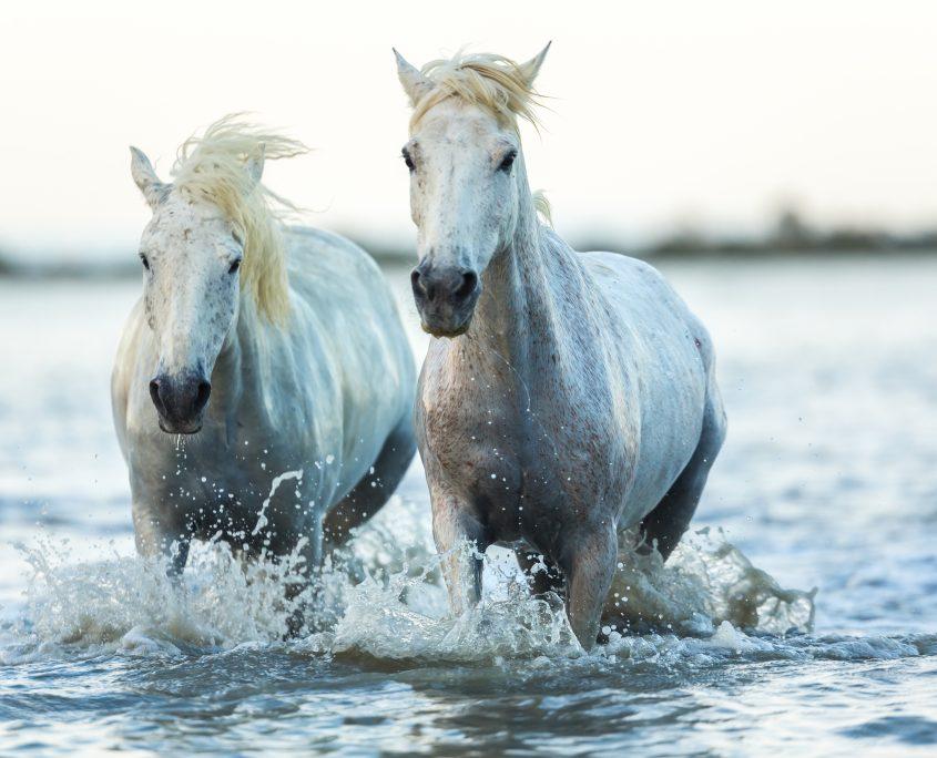 cavallo in estate