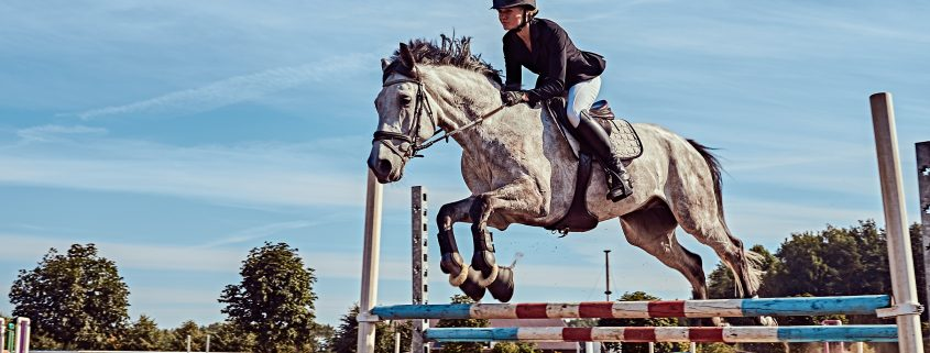 elettroliti per cavalli
