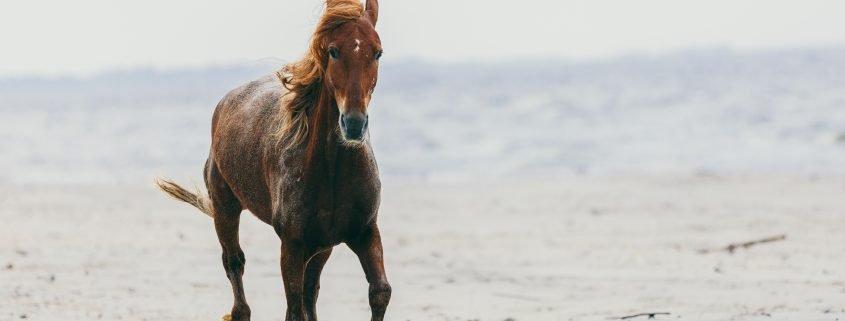 integratori per cavalli da corsa e integratori per cavalli da gara
