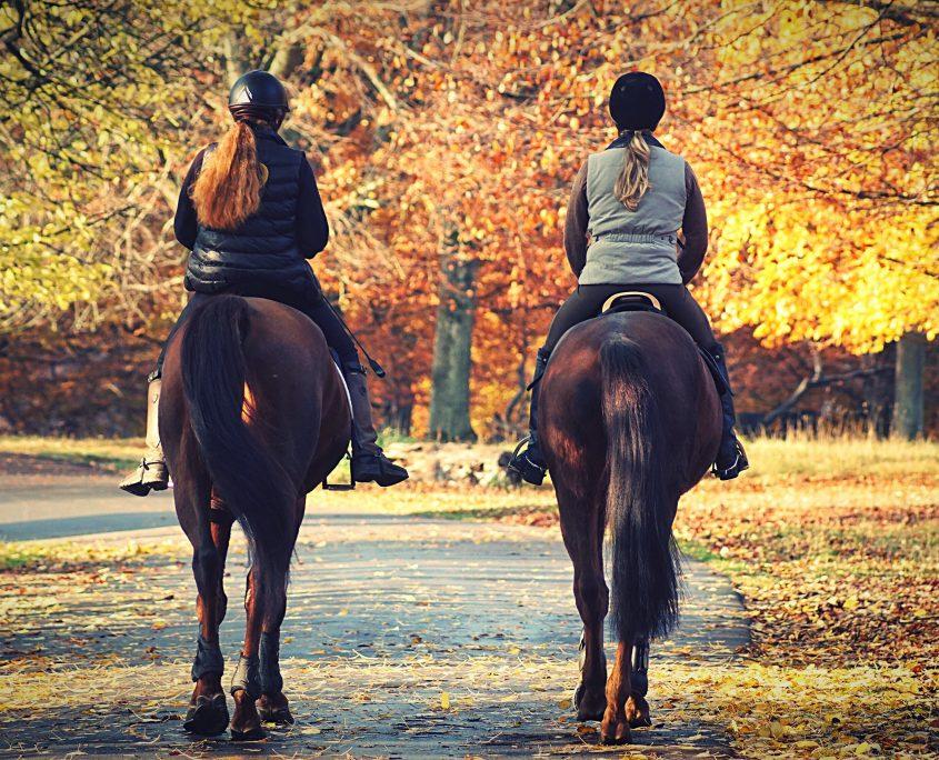 Integratori autunnali per cavalli: la cura del cavallo tramite l'uso di integratori per cavalli in autunno