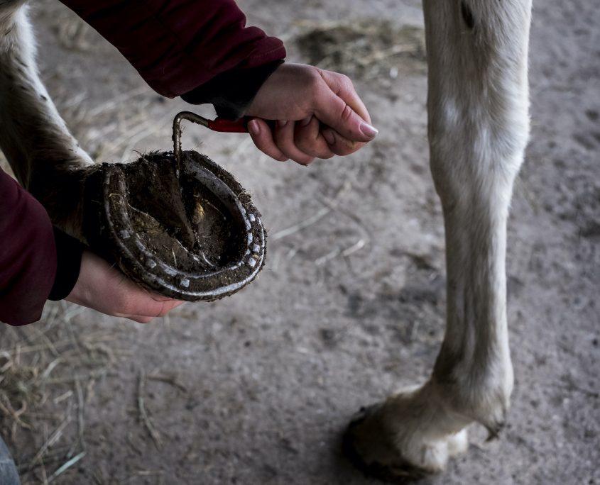Pulire gli zoccoli dei cavalli: guida alla pulizia degli zoccoli del cavallo giornaliera