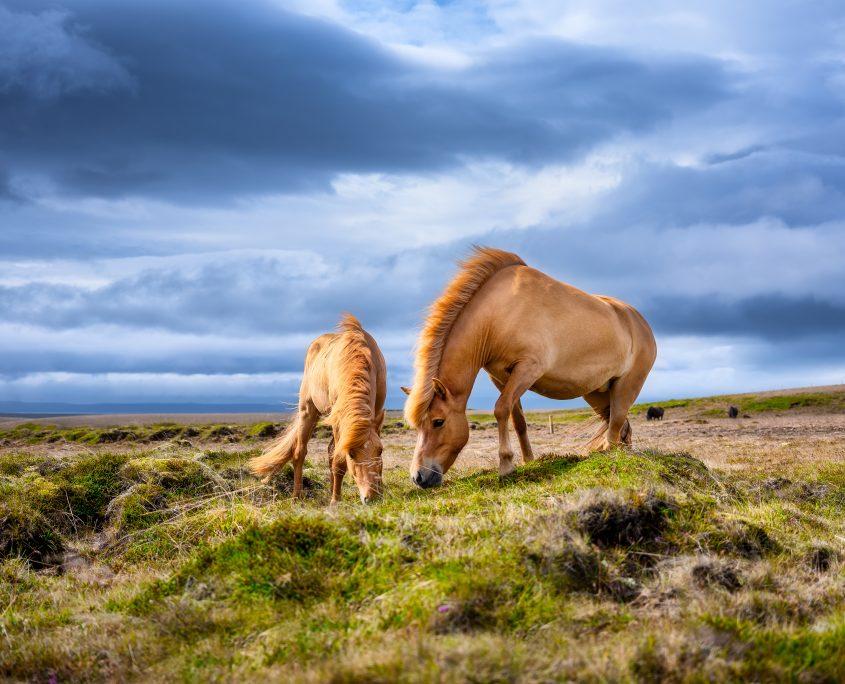 Spray antimosche per cavalli naturale fai da te