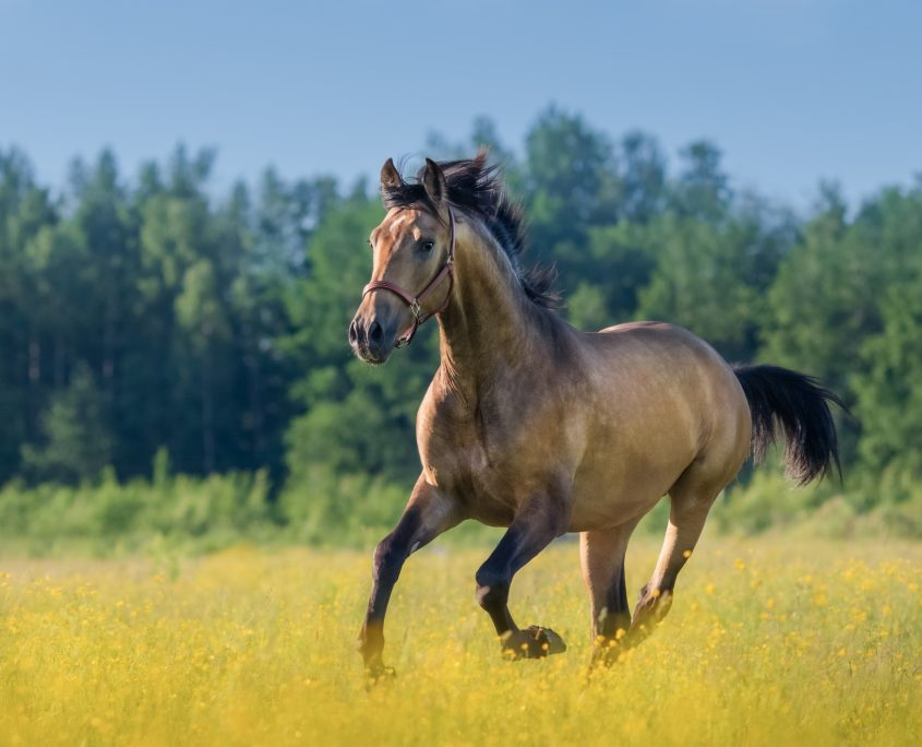 integratori per cavalli per l'estate
