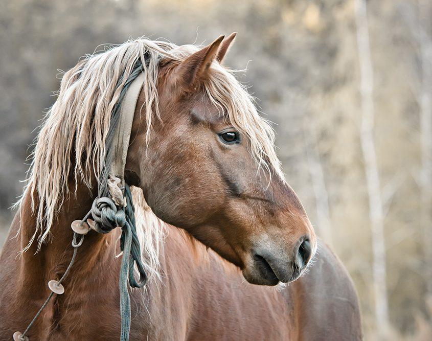 ulcera gastrica nel cavallo