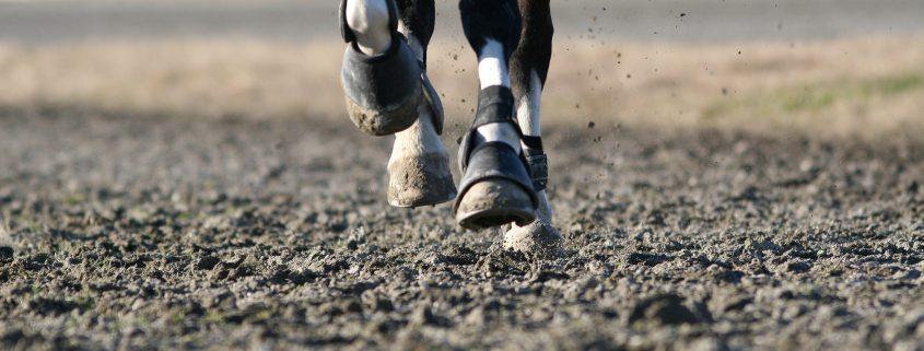 Come curare la laminite nel cavallo: consigli pratici e suggerimenti
