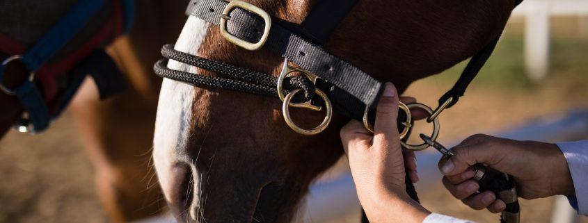 come tenere le briglie del cavallo.