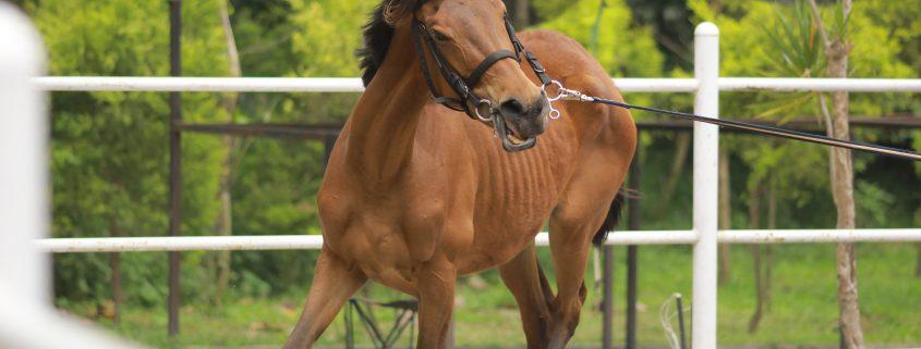 Ansia equina, suggerimenti per gestire l'ansia nel cavallo