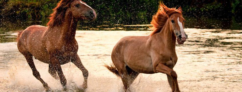elettroliti per cavallo